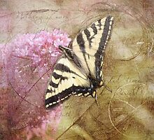 Time For The Butterfly by Crista Peacey