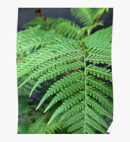 Fern in the Forest Poster