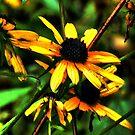 Wildflower by Ann Eldridge