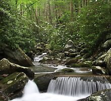 Creekside Serenity  by psamuels2