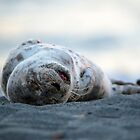 Nap on the Beach by DawsonImages