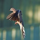 Landing gear down and locked by David  Hibberd