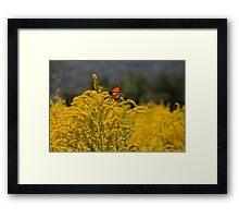 Orange Butterfly on Goldenrod Framed Print
