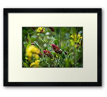 Red Clover Bumble Bee Framed Print