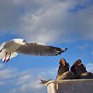 Gull and Boots by Dean Wiles