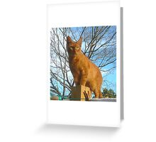 Toby, King of the Clothesline Greeting Card