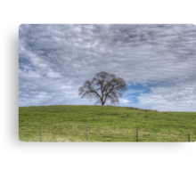 Oak Tree Solitaire Canvas Print