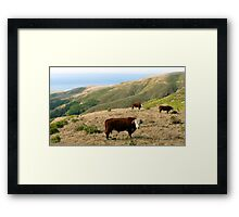 #562     Out To Pasture Framed Print