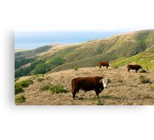 #562     Out To Pasture Canvas Print