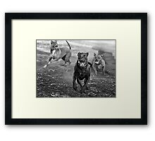 Dogs with game face on .29 Framed Print