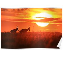 Red Hartebeest - Free and Golden - African Wildlife Poster