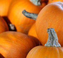 Pumpkins 6 Sticker