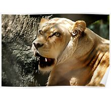 ๑۩۞۩๑ THE FACE OF A LIONESS ๑۩۞۩๑ Poster