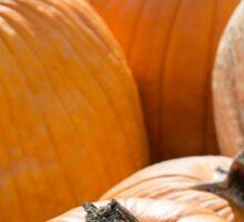 Pumpkin 6 new Sticker