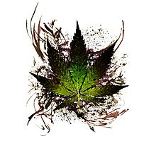 420 Tribute 2012. Photographic Print
