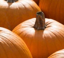 Pumpkins 11 Sticker