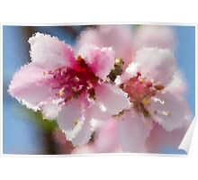 peach blossom in spring Poster
