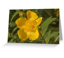 yellow buttercup Greeting Card