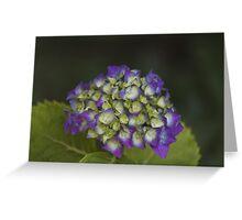 hydrangea in the garden Greeting Card