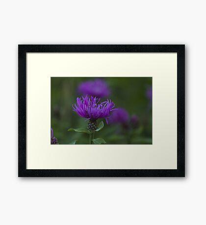 blue flower in spring Framed Print