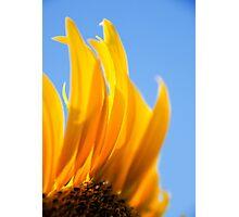 Sunflower 4 Photographic Print