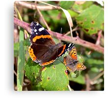 Red Admiral and Small Copper Canvas Print