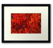 Brilliant Red Autumn Under the Maple Tree Framed Print