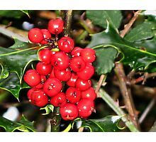 Here's Holly Where's Ivy Photographic Print