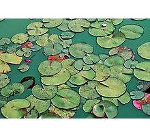 Abstract Waterlily pads Photographic Print