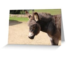 Little donkey Greeting Card