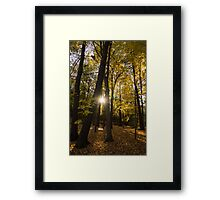 Sun Spotting Autumn - a Peaceful Forest in the Fall Framed Print