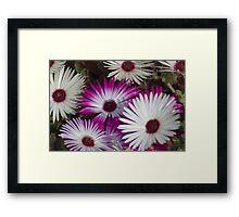 flower in the garden Framed Print