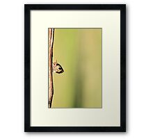 Squirrel Antics - Wildlife Background - Funniest Nature Framed Print