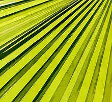 Green Palm Frond by perkinsdesigns