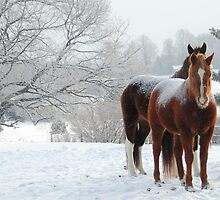 Horses in the Snow by Michele Benson