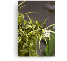 orchid in the garden Canvas Print