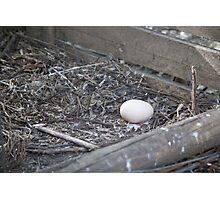 chicken eggs Photographic Print
