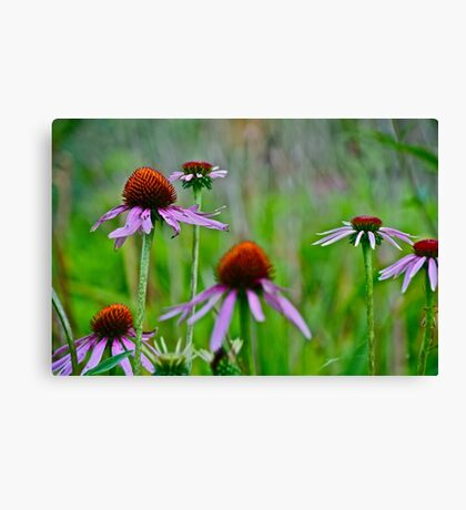 Tough guys Canvas Print