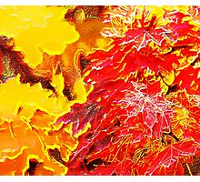 Abstract Autumn Leaves Photographic Print