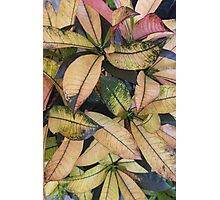 leaf background Photographic Print