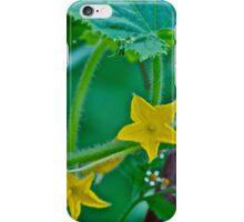 Cucumber flower iPhone Case/Skin