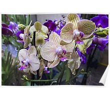 orchid in the garden Poster