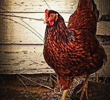 Red Hen Penny by Lee Craig