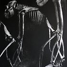 GORILLA BONES (For the Coming Extinctions) by Anthony DiMichele