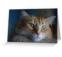 Back Off and Let Me Dream... Greeting Card
