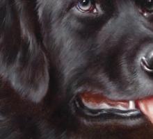 Newfoundland Dog Portrait Sticker