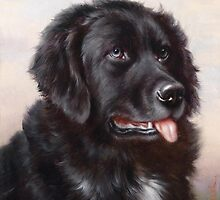 Newfoundland Dog Portrait by BravuraMedia