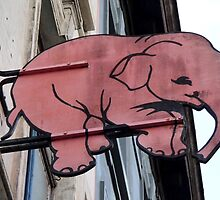 Seeing Pink Elephants? by UrsulaRodgers