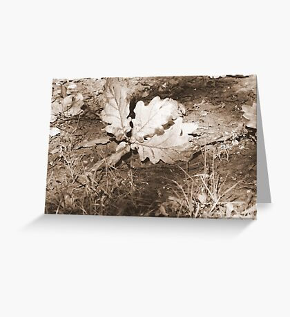 Toned leaves Greeting Card