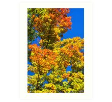 Colorful Fall Trees Art Print